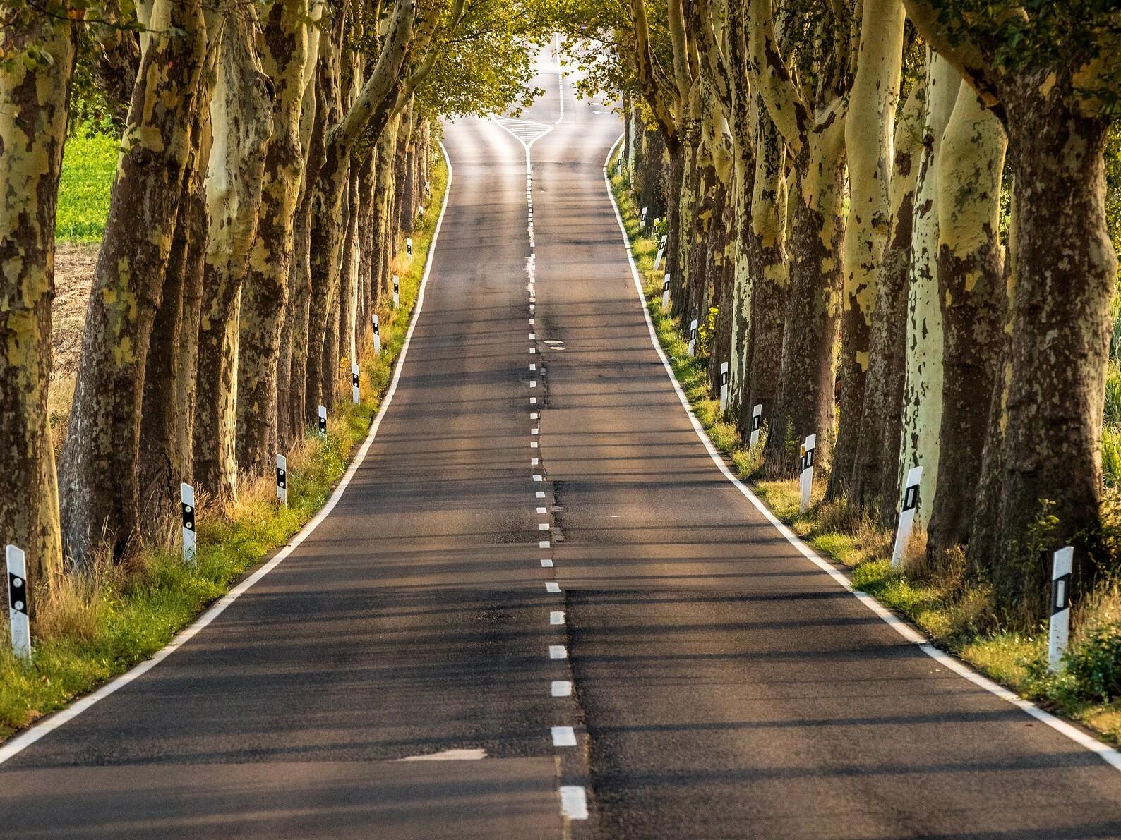 Einsame Landstraße mit alten Bäumen rechts und links.